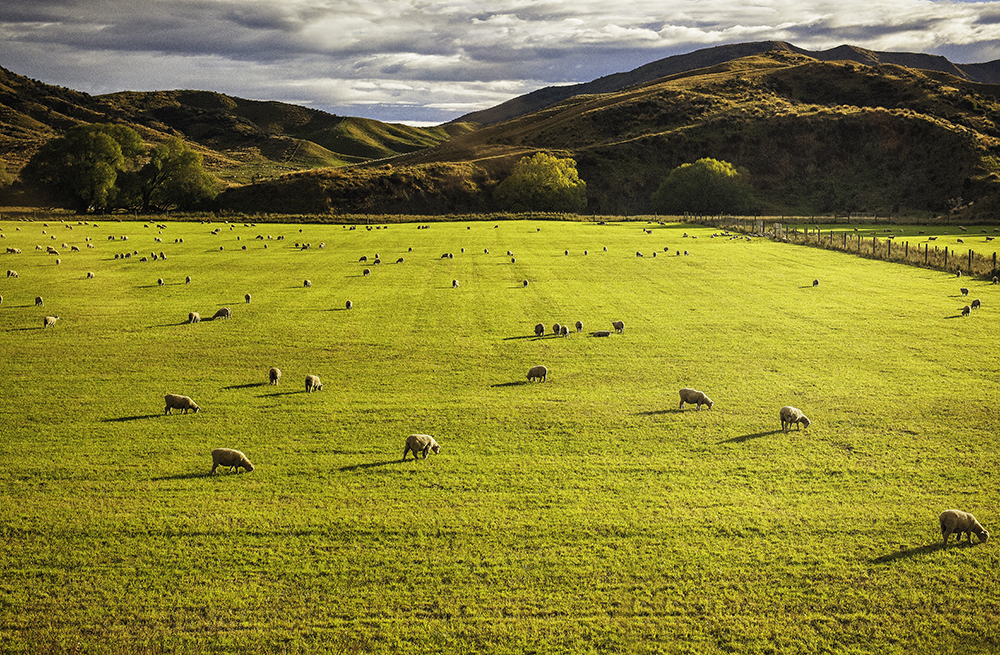 Landscapes Gallery Pastoral New Zealand  ©