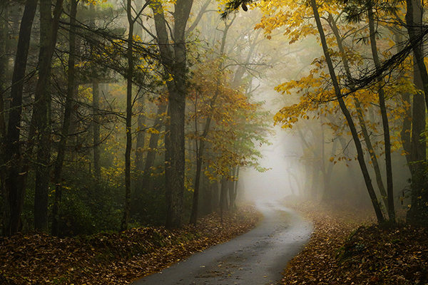Landscapes Gallery Into the Woods 3:  Toward the Fog  ©