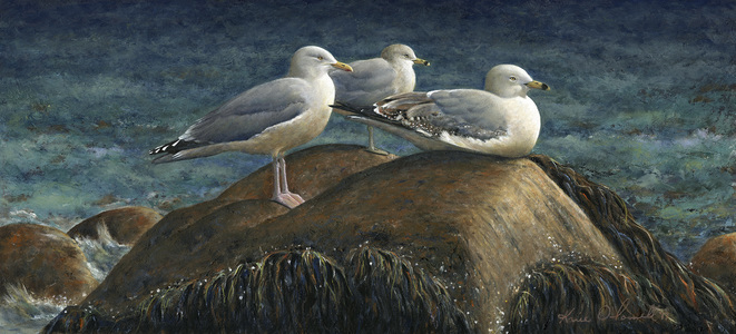 KARIE O'DONNELL Oils Herring & Ring-billed Gulls