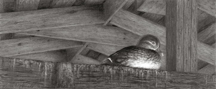 KARIE O'DONNELL Graphites Wood Duck