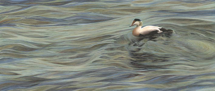 KARIE O'DONNELL Oils Common Eider