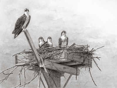 KARIE O'DONNELL Graphites Osprey