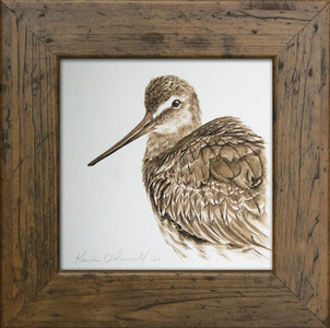 KARIE O'DONNELL Framed Prints & Small Works Walnut Ink