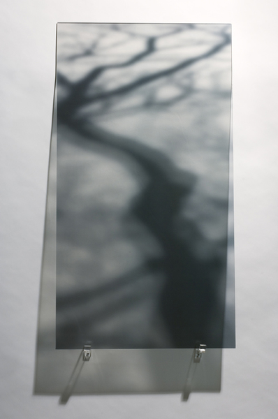 Shadow Photographic Transparency/Plexiglas