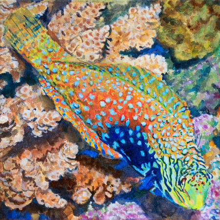 Camouflage Fish Leopard Wrasse