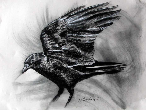 Fish Crow Wing (after photo by Corey Finger)