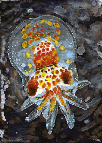 Zooplankton & Microbiology Octopus