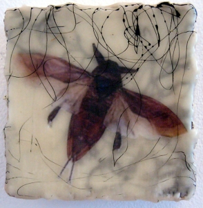 KATHY FEIGHERY Bugs & Butterflies mixed media