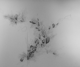 Katlin Evans Drawings graphite on paper and dura-lar