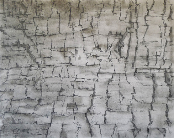 Katrina Bello Scorched Sequoia Sempervirens lead and graphite on paper
