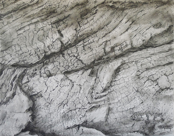 Katrina Bello Barkscapes lead and graphite on paper