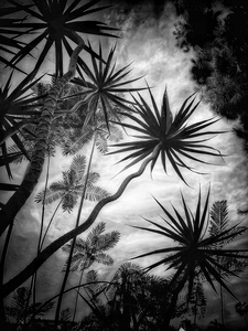 L.A. Photo Curator: Global Photography Awards - 'Where Photography & Philanthropy Meet' 'In the Garden at Chislehurst' portfolio by Laurie Freitag