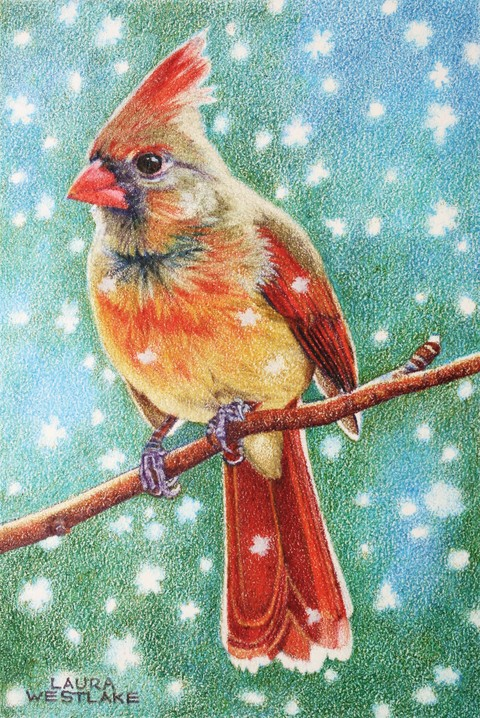 Laura Westlake BIRDS Color Pencil Miniatures