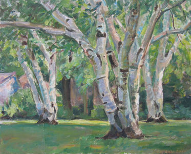 LANDSCAPES Birch Trees