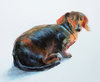 DOG PORTRAITS pastel, gouache on papaer