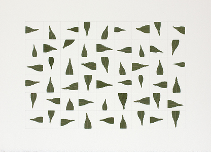 Linda Stillman Botanicals leaves & pencil on paper
