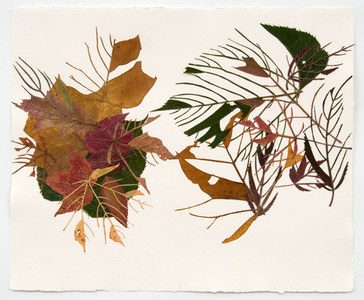 Linda Stillman Botanicals leaves, acrylic medium on paper