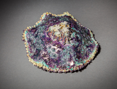 Bottom, Haeckel Microcosm, Purple