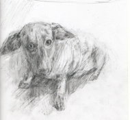 Louise Weinberg Dogs graphite