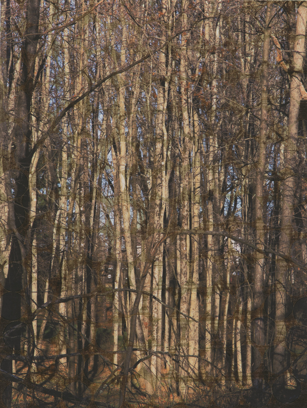 Lucy Meskill Forest Photograph on altered paper surface