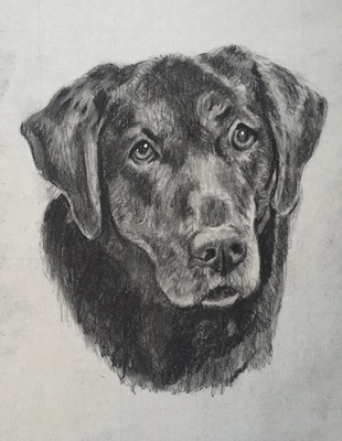 Pets Charcoal on Paper