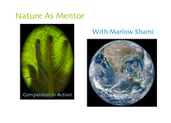 Marlow D.J. Shami Listening to Nature, Your Mentor