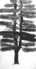 Mary Kelsey Temperate Lands charcoal  on film