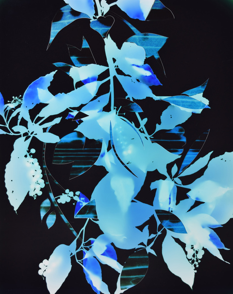 Mary Pinto Cut Outs layered color photograms