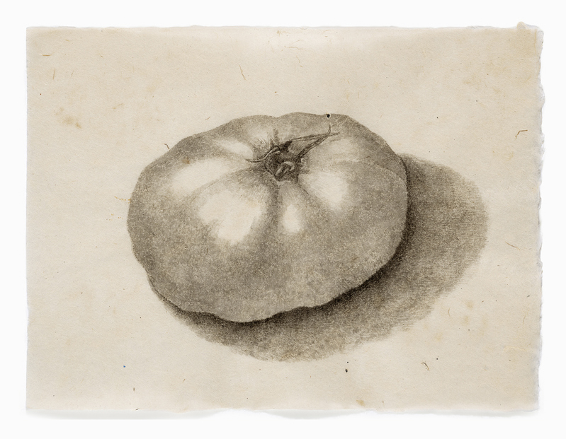 drawn from life Beth's Tomato