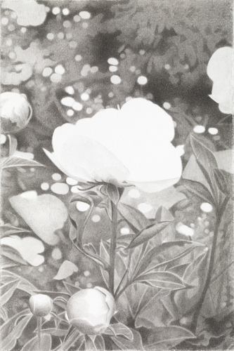 Meg Alexander marden peonies India ink on paper