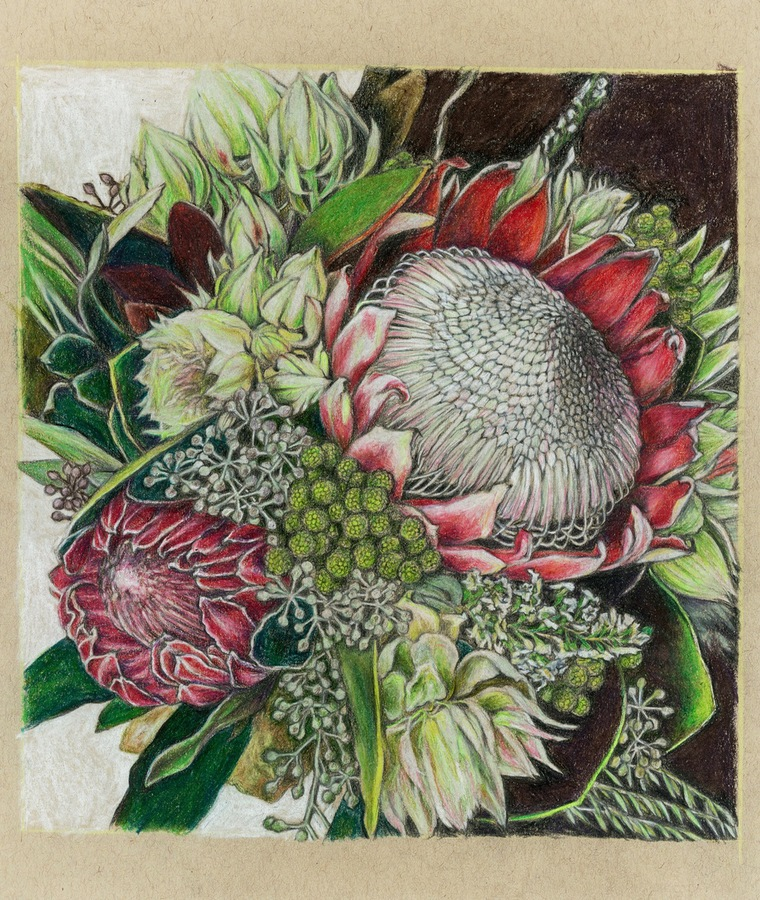 artists  Protea series #1
