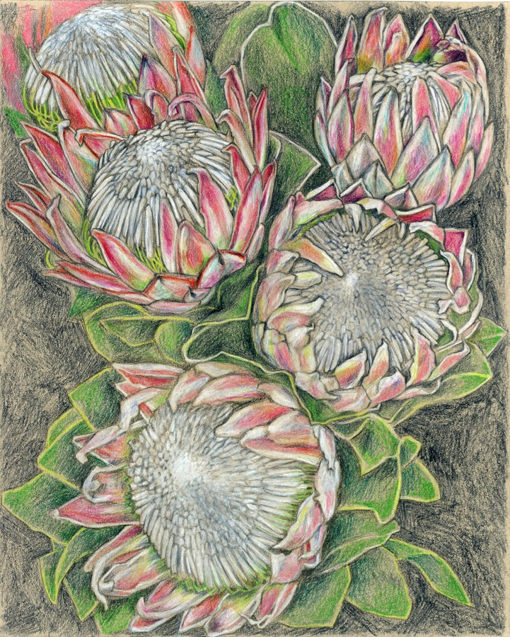 artists  Protea series #4