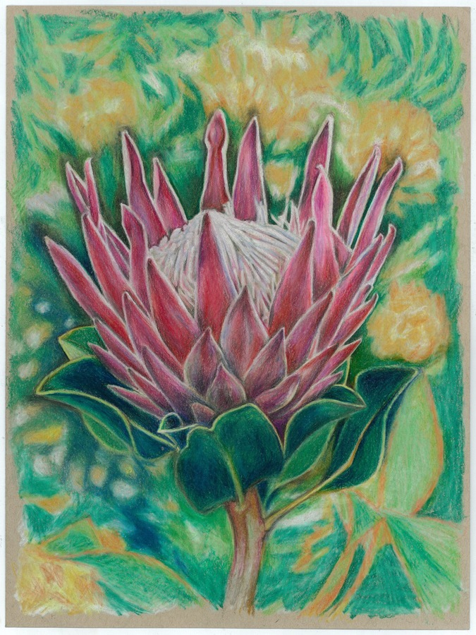 artists  Protea series #8