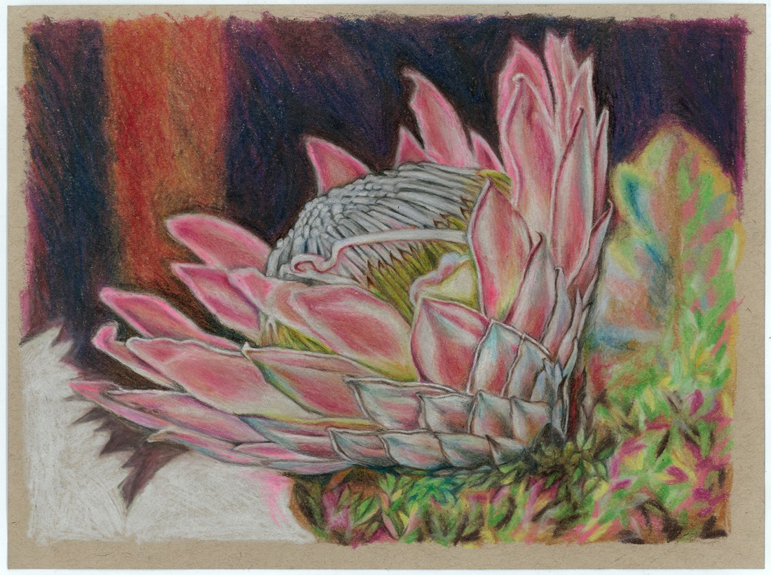 artists  Protea series #6