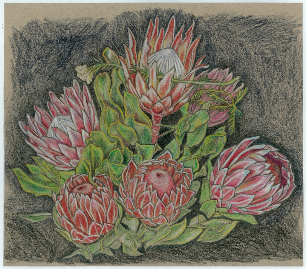 artists  Protea series #9