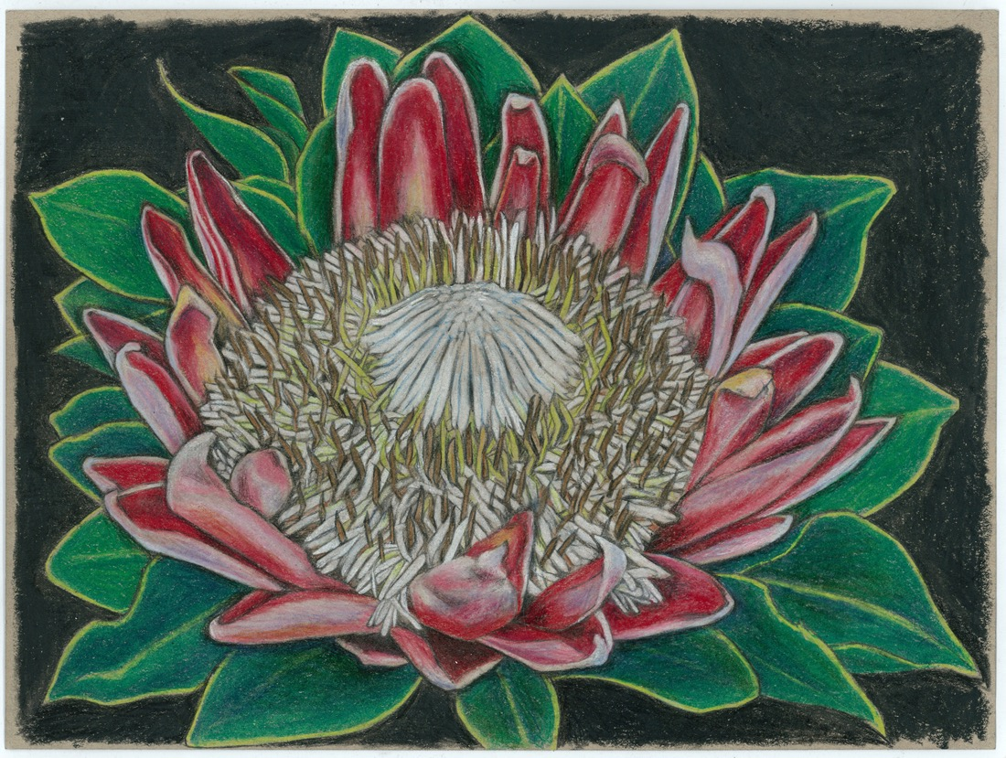 artists  Protea series #7