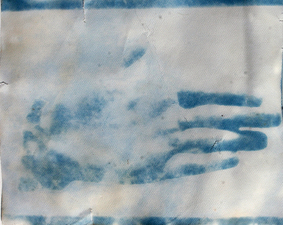Margaret L. Holmes Installation view cyanotype