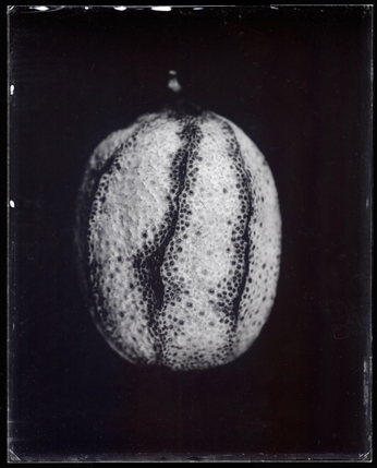 Michael Kolster Single Plates ambrotype