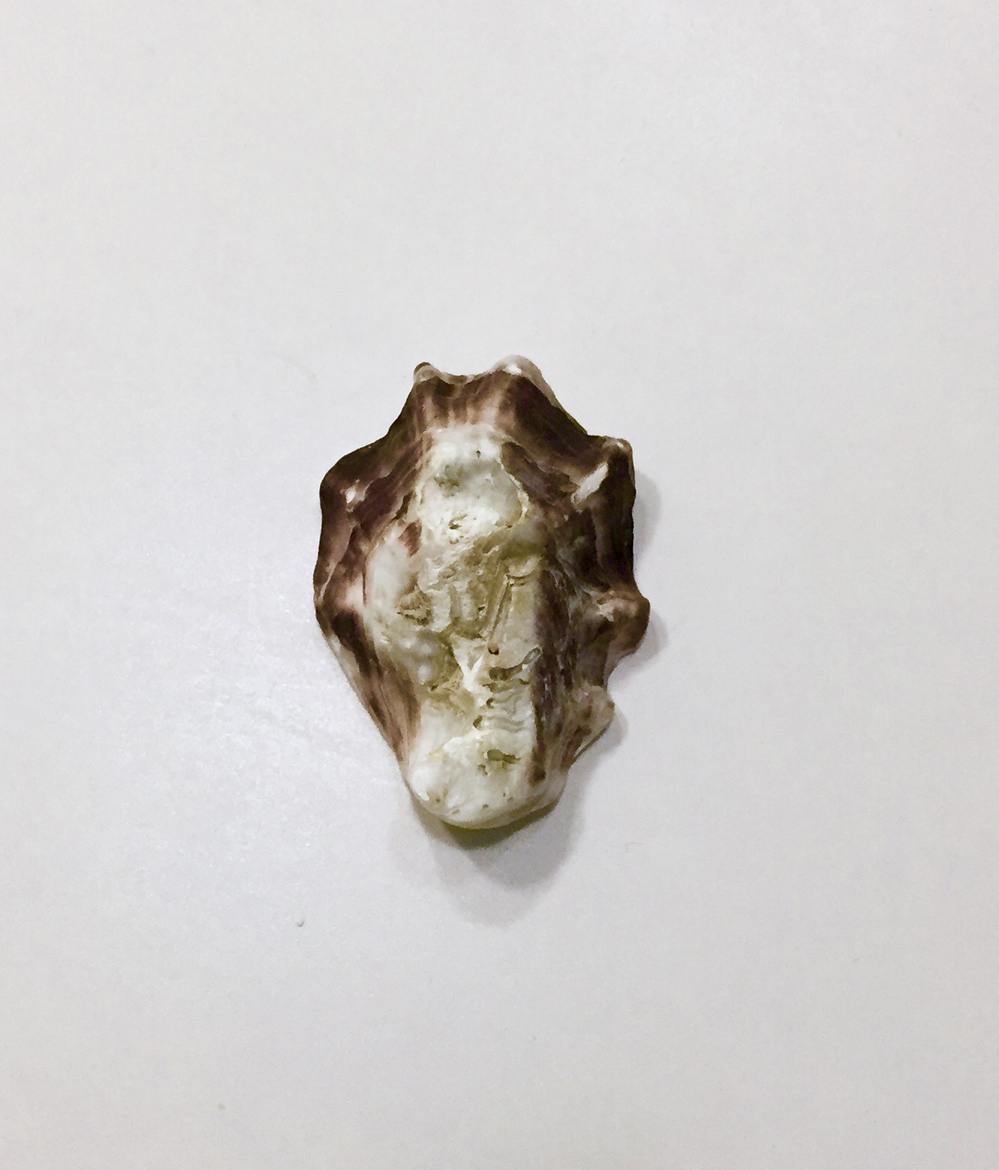 Shift  Adriatic Oyster Shell