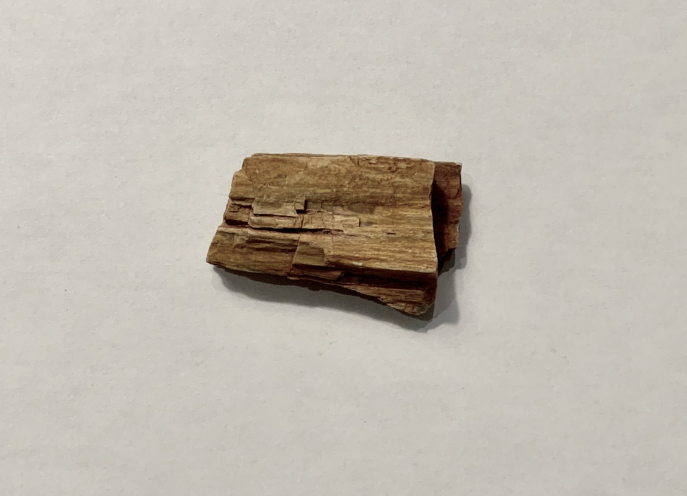 Shift  Petrified Wood