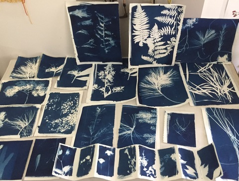 Mollie Murphy Prospect to The The Garden (in progress) garden plants and flowers, imprinted using the cyanotype process