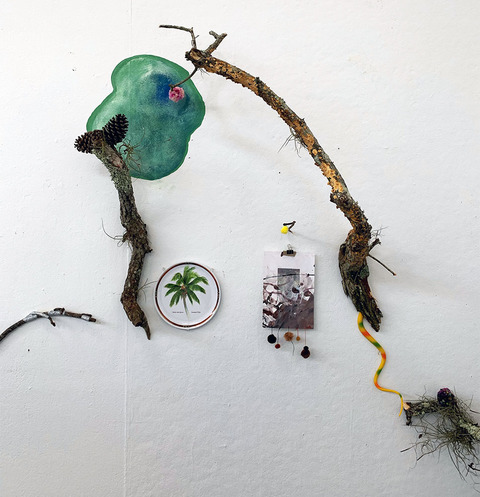 Mollie Murphy This is Florida pine cones, wtaerclor, branches, plastic plate, puff balls, photocollage,  rubber snake