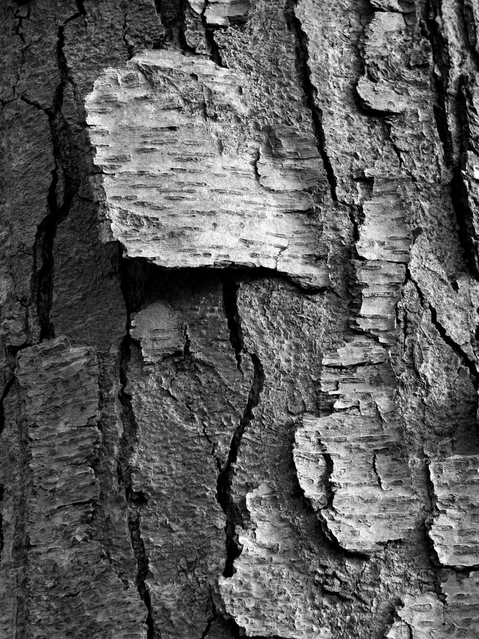 Photography 901 Textural Studies