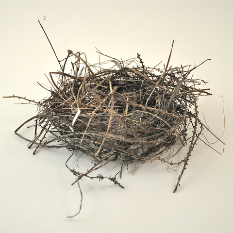 Nancy D. Brown Less, More Bird's nest