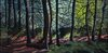 Hemlock Hill series Oil on panel