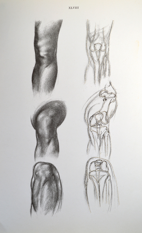 Nicola Ginzel  Rearranging the Bones, Rearranging the Flesh - 2007-14 hand embroidered drawings with thread, anatomy book page
