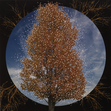 Nicola Woods Arbor Vitae series, beautiful illuminated photographs of trees, 2015 Backlit Fuji Trans - punctured