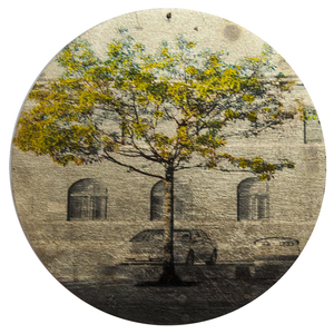 Nicola Woods The Trees Amongst Us  - new tree portraits on radiant metal leaf for sale Ink jet print on acetate, composition gold leaf, wood