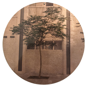 Nicola Woods The Trees Amongst Us  - new tree portraits on radiant metal leaf for sale Ink jet print on acetate, copper leaf, wood