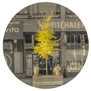 Nicola Woods The Trees Amongst Us  - new tree portraits on radiant metal leaf for sale ink jet print on acetate, mounted on wood round, composition gold leaf